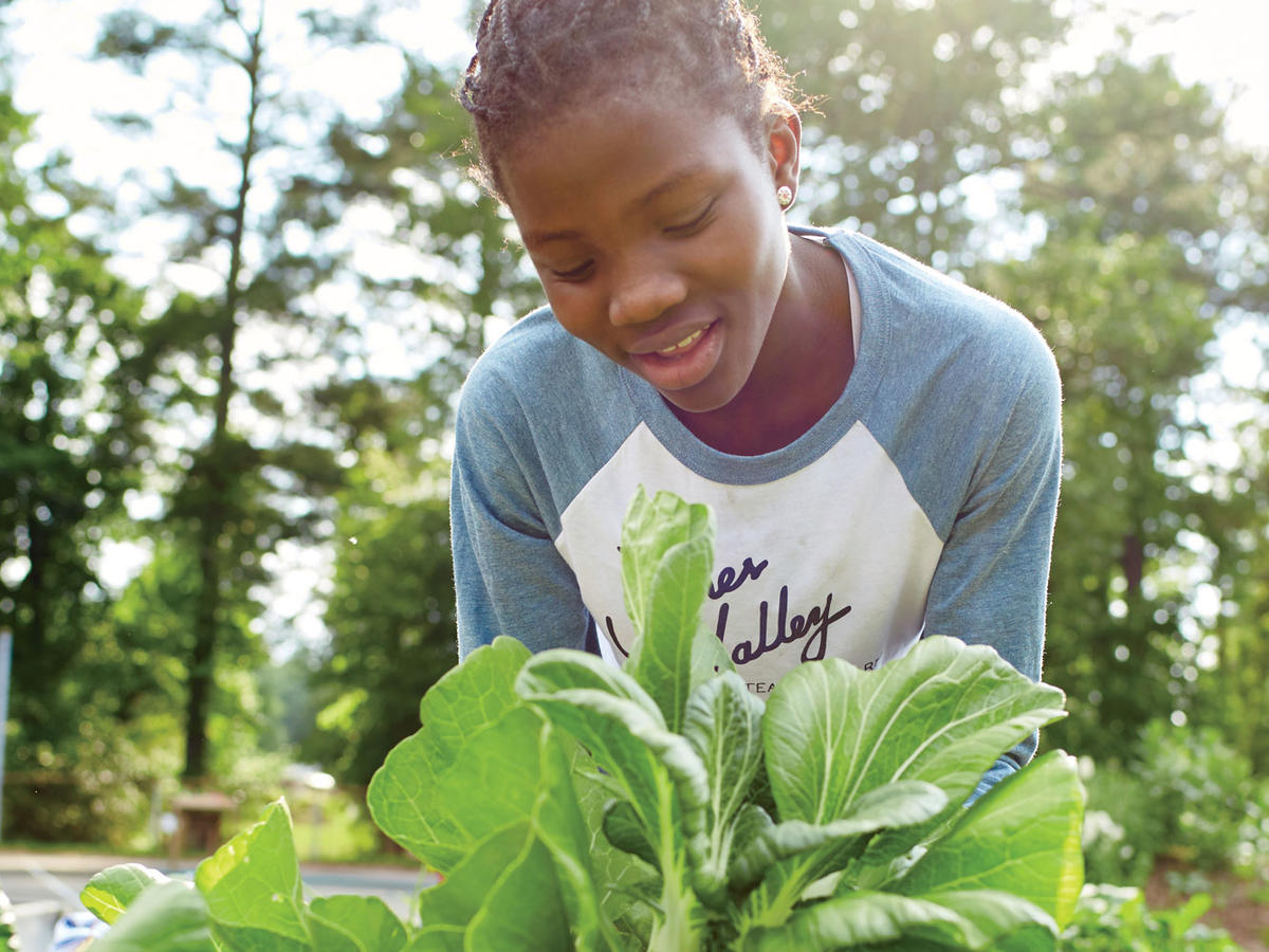 Garden School: What You Need to Know About Growing and Enjoying Bok Choy