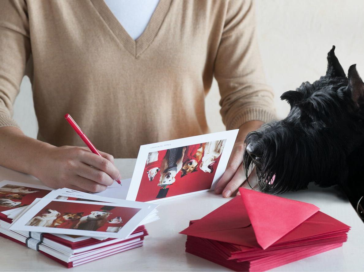 Hooray for the Underdog! Holiday Card