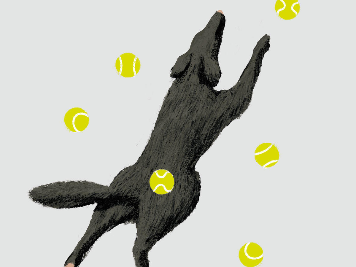 Dog Chasing Tennis Balls