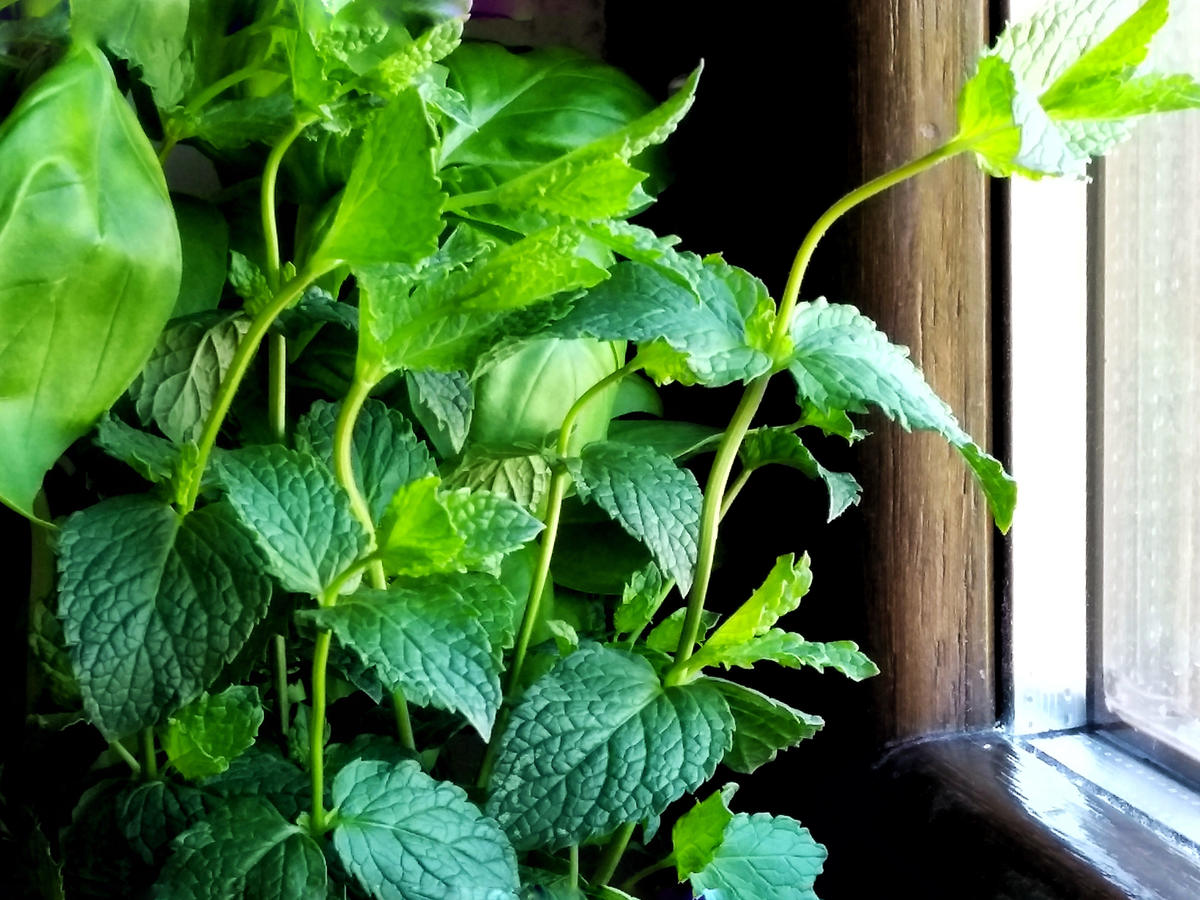 How to Cook With Mint for Fresh Flavor