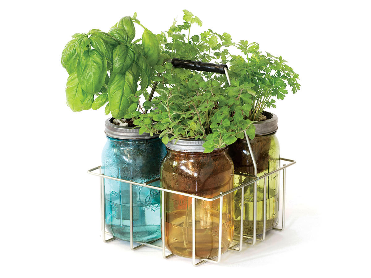 Modern Sprout Garden Jar Kitchen Herb Kit