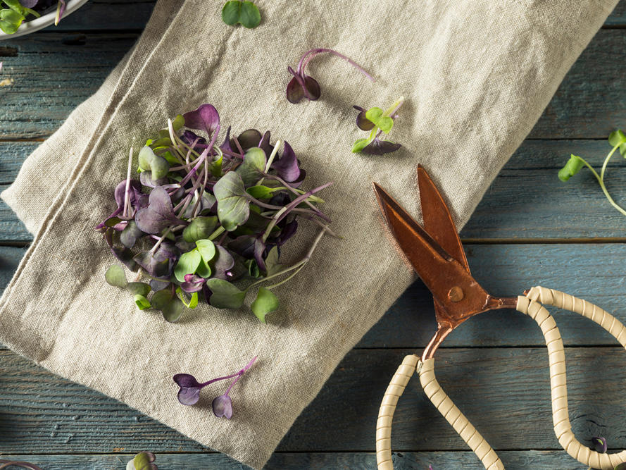 Why Microgreens Are So Nutritious and Tasty, Plus How to Use Them