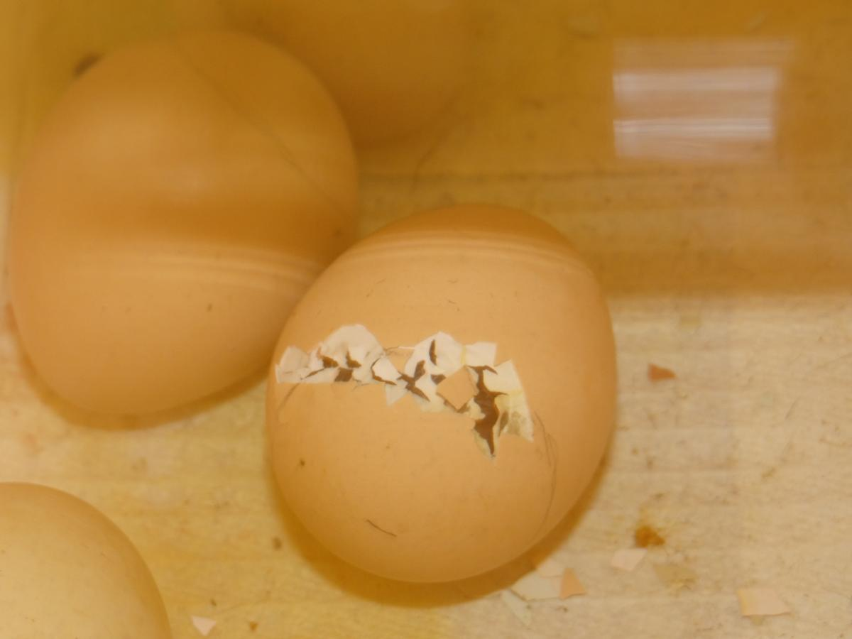 egg-hatch.jpg