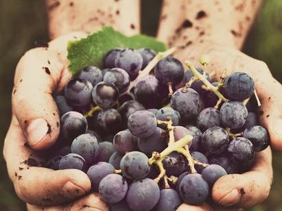 hands_holding_grapes1.jpg