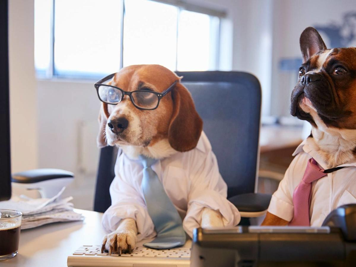 Taking Your Dog to Work Is Actually Great for Your Mental Health