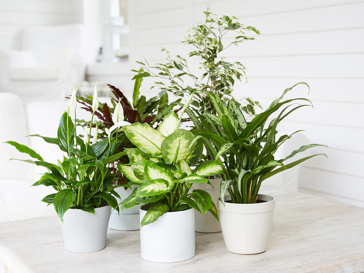 Three plants on wooden table