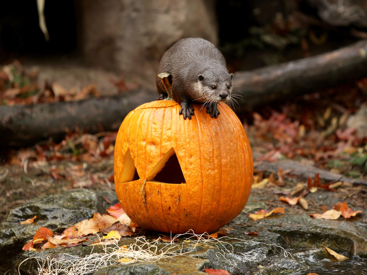 15 Animals Playing with Pumpkins for Halloween