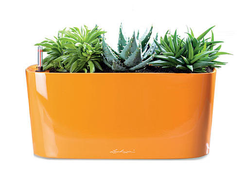 Lechuza Windowsill Planter