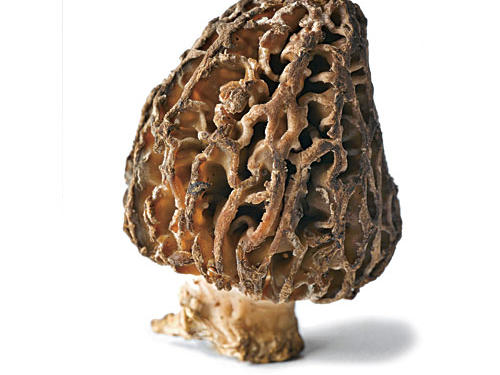 One of spring's finest offerings is the morel mushroom, with its nutty, meaty flavor and wonderfully whimsical appearance. The nooks and crannies hide lots of grit, so be sure to submerge the mushrooms in cold water, swish vigorously, and gently pat dry before you cook and eat them. Sauté in a bit of butter or oil, and pair with scrambled eggs, pasta tosses, or pizza.