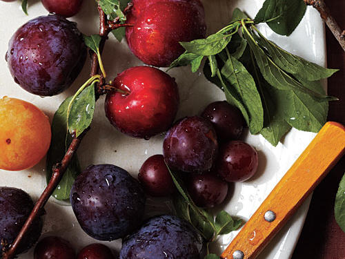 America's romance with heirloom produce means more plum varieties each year. Flavorful light-skinned plums—like Greengage—had been mostly replaced by larger, darker fruits, which hide bruises. And because they're often harvested before ripe, they sometimes lack flavor. Happily, more interesting varieties are making a comeback.