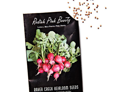 Our Favorite Radish Varieties