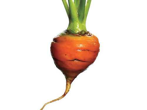The squat, round shape of Paris Market carrots makes these French imports ideal for planting in shallow soil—perfect for container or window box gardeners.