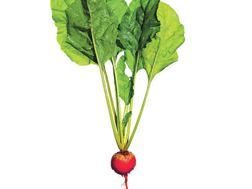Not a beet fan? This one might win you over. A little sweeter than darker varieties, it still has an alluring earthiness. Also, it doesn't stain everything purple-red.