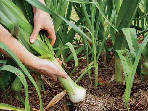 The best thing you can do for your garden is to closely observe its progress and take steps to correct little problems before they become big ones.Tip #1 Soil Test: A soil test is the smart way to assess your soil's pH and any nutrient deficiencies. The results will help you determine what type of amendments or fertilizers are needed. You can have your soil tested from the Cooperative Extension office.