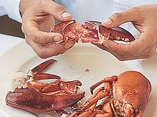 Extracting Lobster Meat: Crack Claws Open