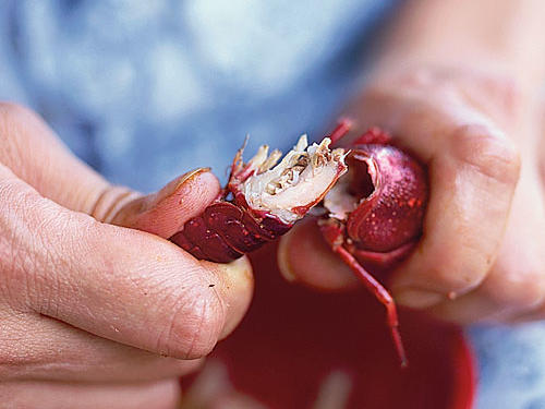Gently twist your hands in opposite directions until the crawfish splits in half.