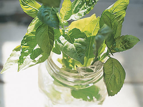 There are more than 60 types of basil, all members of the mint family. Basil is available year-round in supermarkets, but summer is the herb's best season. To select, look for basil that isn't wilted and doesn't have dark spots. And if you're growing your own, be sure to harvest it on a sunny day, as the sun will bring out the essential oils that won't be present otherwise.Recipes: • White Pizza with Tomato and Basil• Coconut and Basil Steamed Mussels • Purple Basil Lemonade • Peach and Basil Shortcake • Basil and Corn Farro SaladSee More: Use Your Basil Bounty