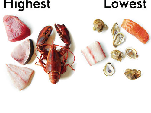 53. You avoid seafood because of the risk of mercury