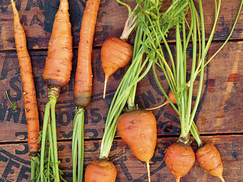 Thin carrots to stand 2 to 4 inches apart, giving each room to grow. Keep the soil evenly moist by watering weekly. You can pull and eat them anytime, whether they are small or large.