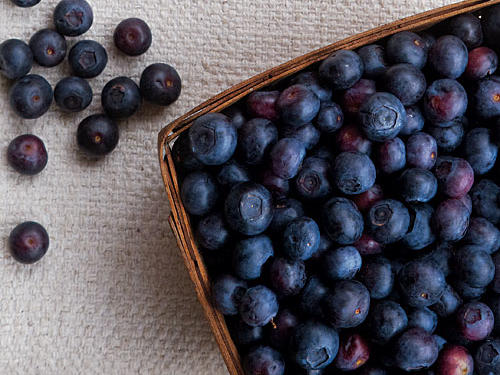 Guide to Blueberries