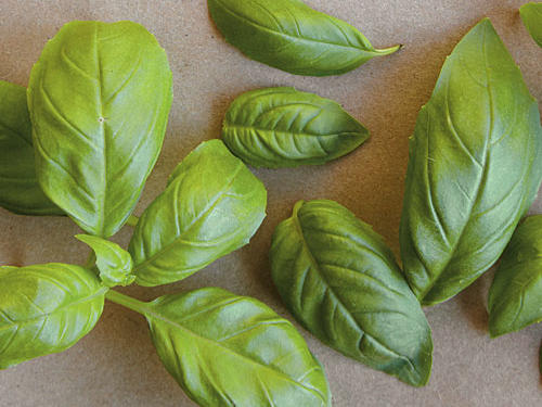 Guide to Basil