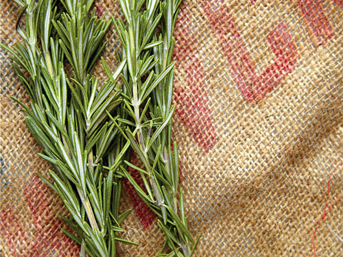 Guide to Rosemary