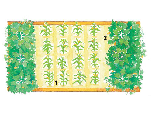 Corn (1): Plant in a block of four rows by four rows for the best pollination.Squash (2): Substitute crookneck, straightneck, zucchini, or pattypan squash.