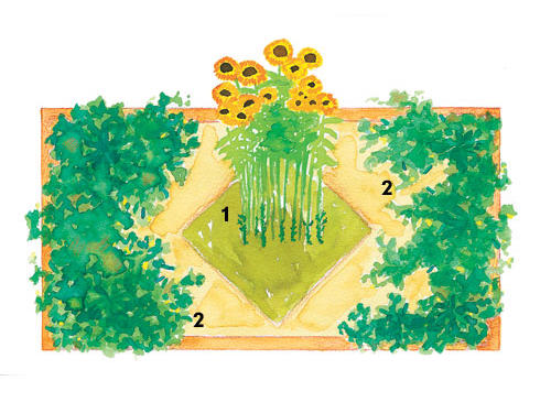 Sunflowers and pole beans (1): In the summer, plant the center section with sunflowers. After they reach 3 to 4 feet tall, sow pole bean seeds at the base of the stalks, using the sunflowers as a homegrown trellis.Bush cucumbers (2): Substitute summer squash or bush-type watermelons.