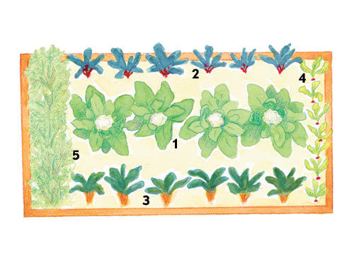 This traditional row-type layout lends itself to a variety of options.