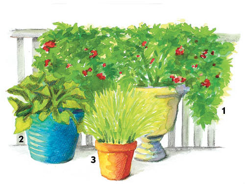 For containers, a grouping of three or more pots of differing sizes is a great way to get a variety of produce from a limited amount of space. A good base will include a large urn with lots of room for roots, accompanied by an 18- to 24-inch pot and a smaller 12- to 14-inch pot. Choose lighter-weight material for those placed on a patio or balcony, which may not be able to handle the weight of heavier containers.Containers: Warm SeasonTomatoes (1): Plant tomatoes in a larger urn, and choose varieties bred for containers, such as Patio or Sweet 'N' Neat, which can be grown without support. You can also plant a determinate (Better Bush, Bush Early Girl, Bush Goliath) or dwarf indeterminate (Husky Cherry Red) that can be supported using a tomato cage or homemade tepee. If you have an area next to a railing or fence that gets adequate sunlight, you'll have more options because the vines can use it for support.Zucchini (2): One plant can be quite prolific in an 18- to 24-inch pot. Substitute crookneck, straightneck, or pattypan squash.Chives (3): Perennial herbs such as chives or thyme can remain in a small pot year-round. Substitute creeping thyme or Spicy Globe basil.