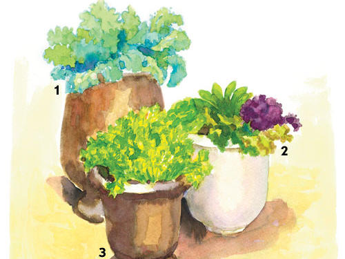 If the plants don't live through the winter, replant them again in early spring before the last frost.Kale (1): Substitute cabbage, broccoli, mustard greens, cauliflower, or Brussels sprouts.Lettuce (2): Potted lettuce won't provide endless salads, but it's ideal to supplement store-bought greens and provide enough for sandwiches.Cilantro (3): Substitute parsley, chives, or dill.