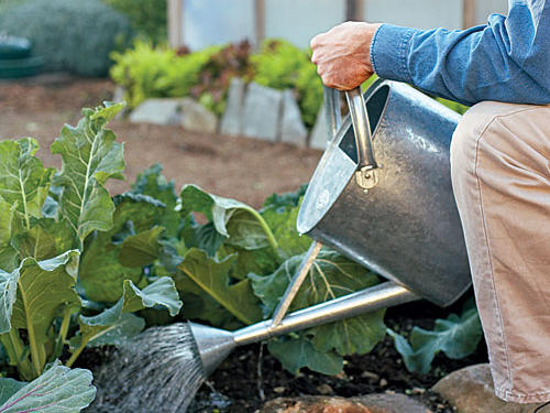 A good rule of thumb is that gardens need about an inch of water each week. Apply water before the soil dries out. Wet the soil thoroughly to encourage deep rooting, and then avoid watering again until it's needed. Overwatering can be just as detrimental as underwatering.