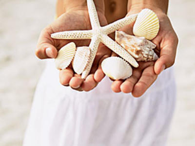 Cayo Costa State Park is one of the best shelling destinations in the world.