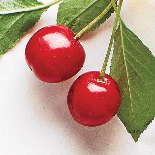 Bright Red Sour Cherries