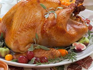 Gobble-Gobble: The Turkey
