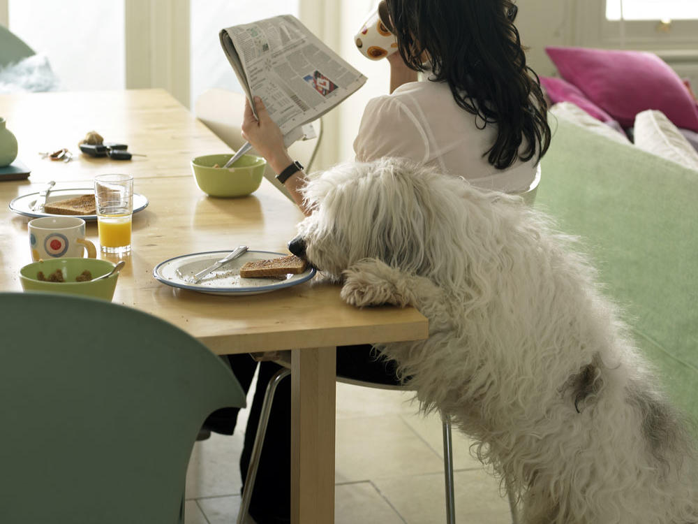 Foods Pets Should Avoid