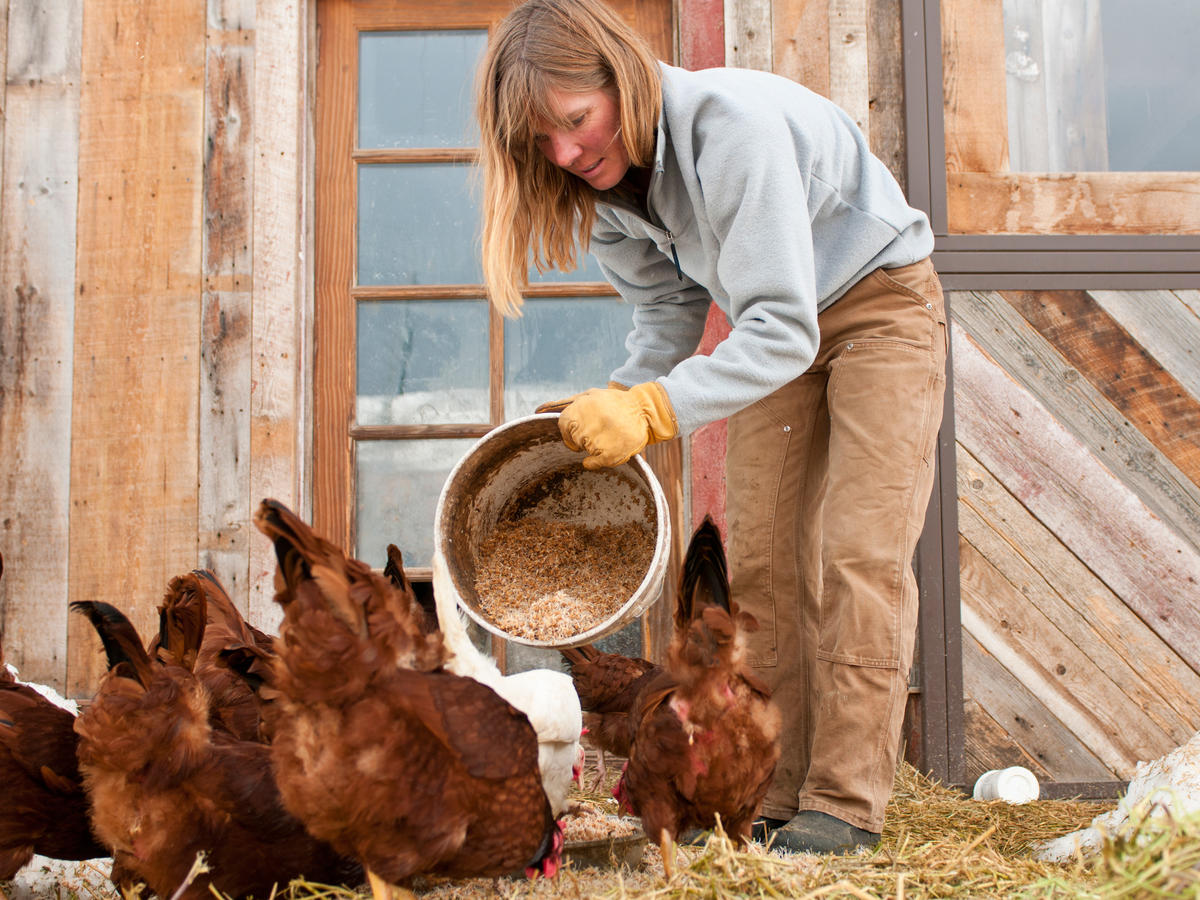 Farmer Feeding Chickens
