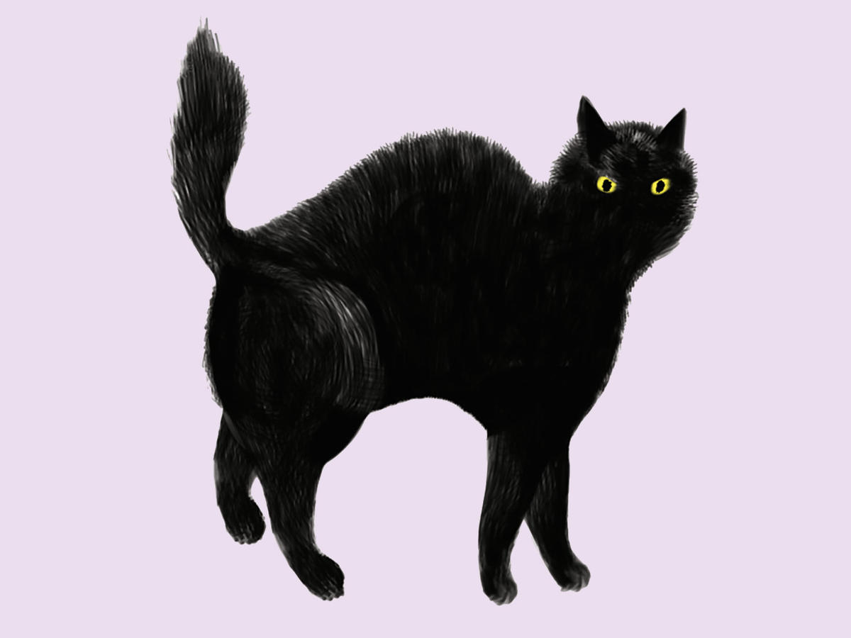 Black Cat Illustration