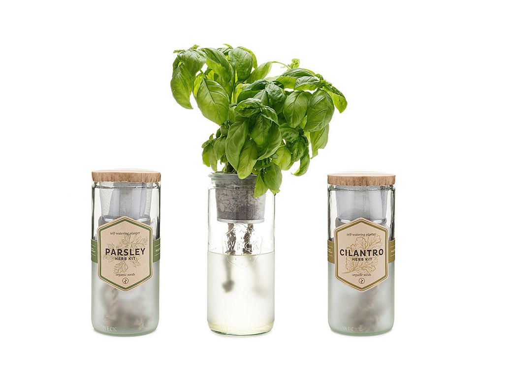 This Indoor Herb Garden Kit Makes Growing Basil Ridiculously Easy
