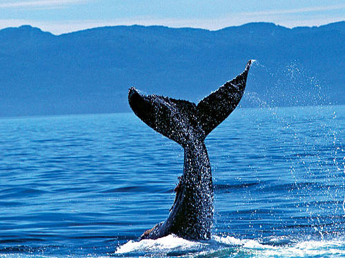 During winter migration, roughly December through March, humpback whales pass close enough to allow you to whale-watch from shore. January traditionally offers the most viewing opportunities.